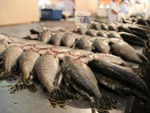 Confira os preços do Feirão do Pescado Semana Santa, em Manaus
