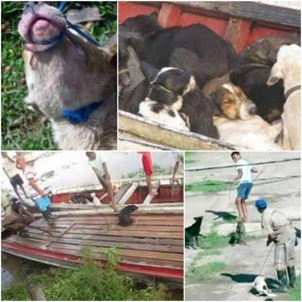 Ex-prefeito que comandou matança de cães, no Pará, inicia cumprimento de pena