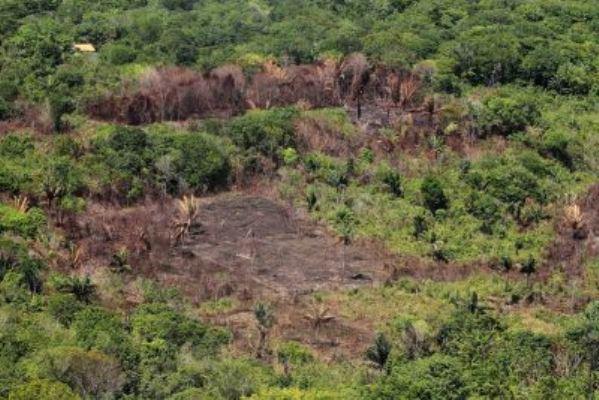 Governo do PA intensifica fiscalização ambiental com base em dados do Inpe