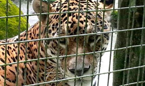 Caama busca parcerias para manutenção de animais do Hotel Tropical