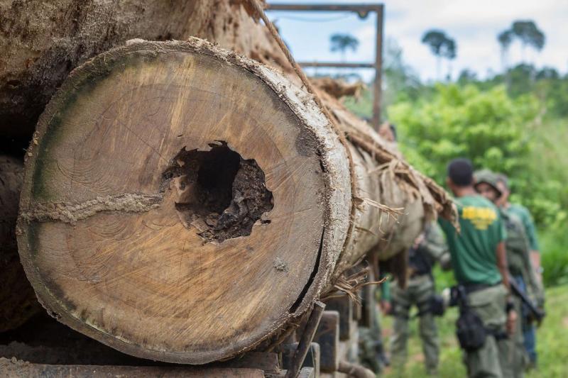 Justiça Federal condena cinco pessoas por crimes de comercialização de madeira, no PA