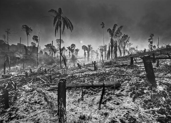 'Maior devastação da história da Amazônia', alerta fotógrafo Araquém Alcântara