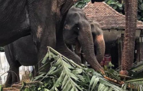 Imagem de elefante raquítico choca o mundo e desperta investigação