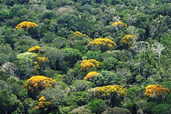 Amazonas reduz queimadas em 39% e ocupa 6º lugar no ranking da Amazônia Legal