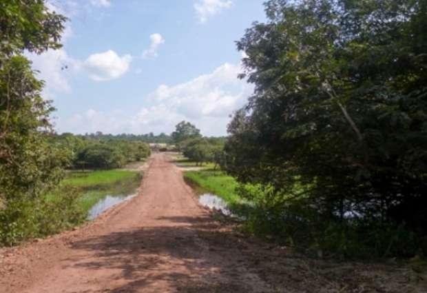 Justiça suspende selo ambiental de madeireiras por obra ilegal, no Pará