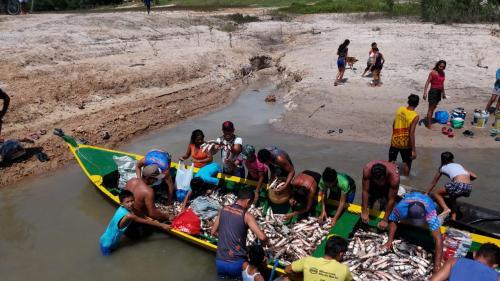 Prefeitura de Parintins entrega mais de 14 toneladas de pescado nos rios Tracajá e Mamuru
