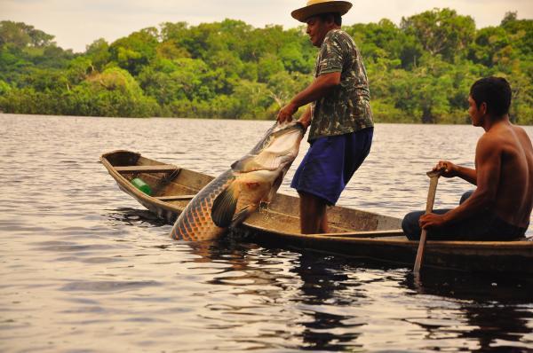 Pescadores artesanais do AM vão receber subvenção econômica por quilo do pirarucu