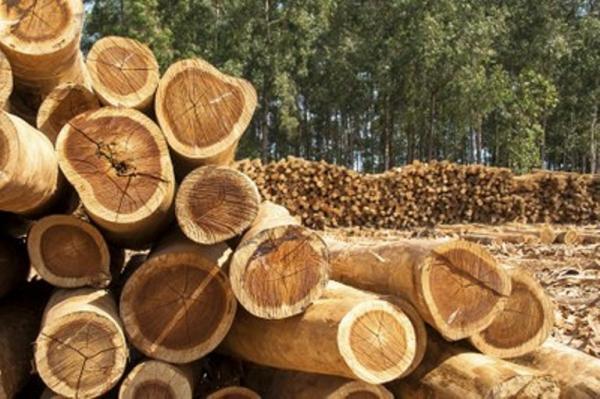 Justiça condena empresário por extração ilegal de madeira no sul do Amazonas