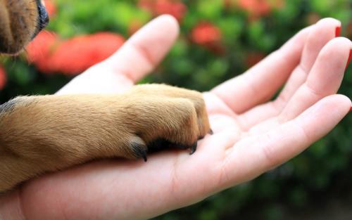 Pets e coronavírus: Sema orienta sobre cuidados com animais de estimação