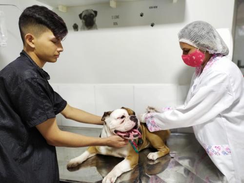 Qual a importância de vacinar os animais de estimação?
