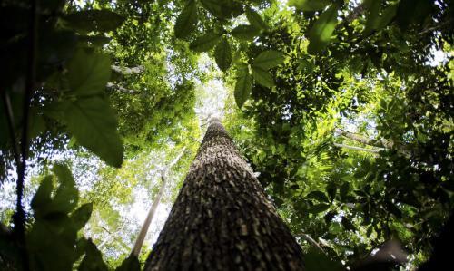 Juiz suspende decreto de Bolsonaro que transferiu para Ministério da Agricultura poder de concessão de florestas