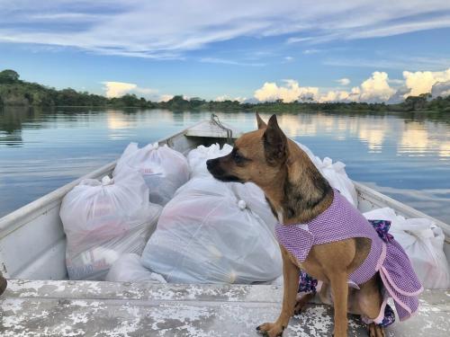 'Dog influencer' distribui alimentos no interior do AM