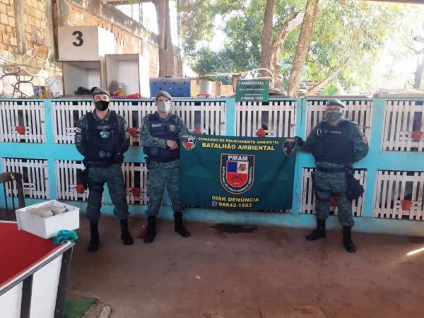 PM desmonta rinha de galos e criação ilegal de pássaros silvestres, em Manaus