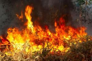 MPF questiona Ibama sobre recolhimento de brigadistas que atuavam no combate a incêndios na Amazônia