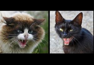 Conheça o 'gato feral', do polêmico projeto da deputada amazonense Joana D'Arc