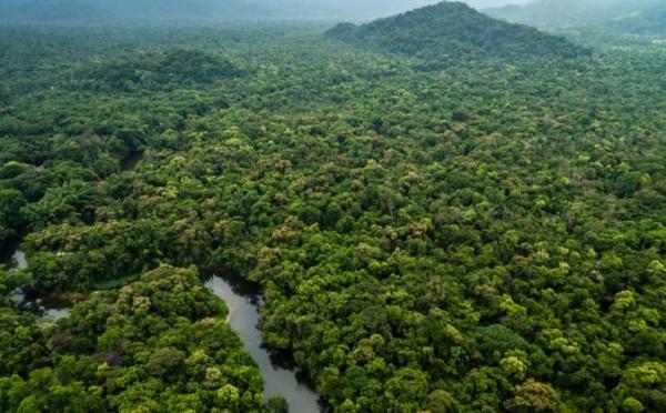 MPF/AM exige indenização de R$ 80 milhões de desmatadores de floresta nacional em Lábrea