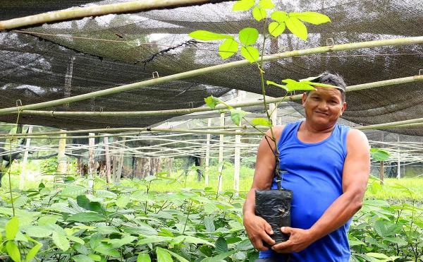 Em Maués,11 mil mudas de guaraná são distribuídas para produtores rurais