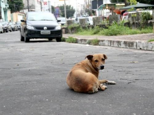 Zoonoses de Manaus reabre agendamento para castração de animais