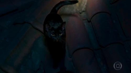O Sétimo Guardião: Gato Léon vira homem, dá surra em Sampaio e tem rosto humano revelado