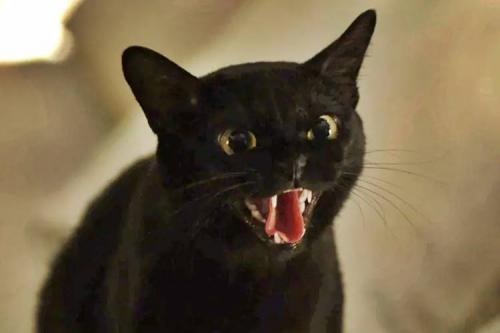 Gato Leon será morto por Sampaio, em Sétimo Guardião