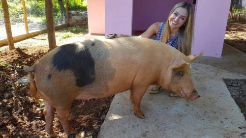 'BBB 19': Irmão de Paula diz que porca da sister está prenha e depressiva